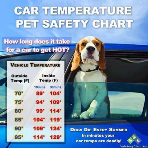 car temperature safety chart
