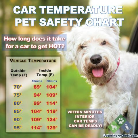 pet safety temperature chart